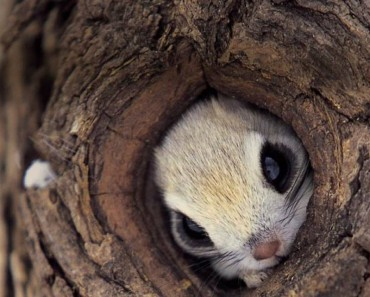 squirrel-hiding-in-a-tree-big (1)