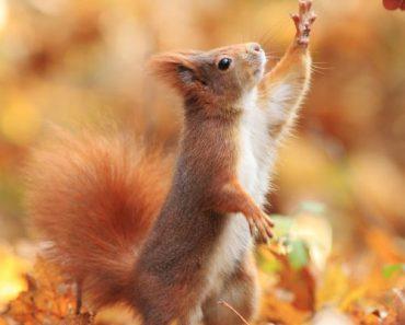 poveste cu veverite